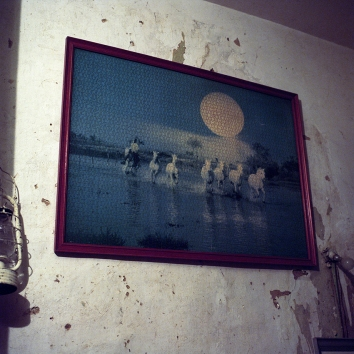 Les chevaux / J
